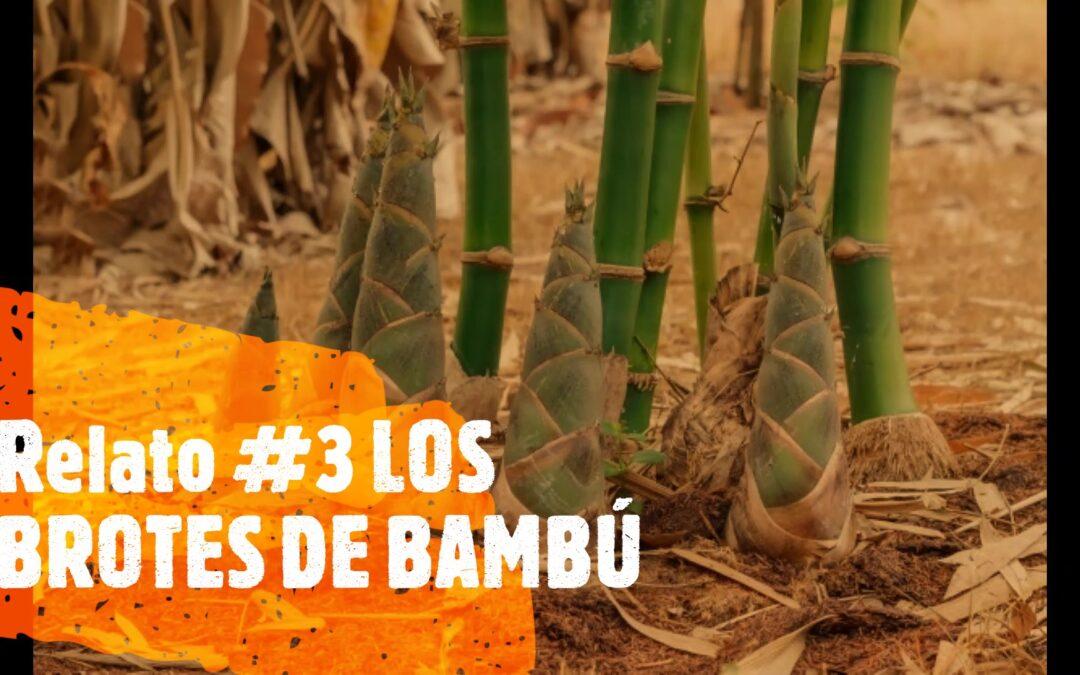 Relato #3 LOS BROTES DE BAMBÚ